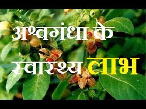 अश वग ध क स व स थ य ल भ Ashwagandha Health Benefits In Hindi Health C Health Benefits Health Care Health