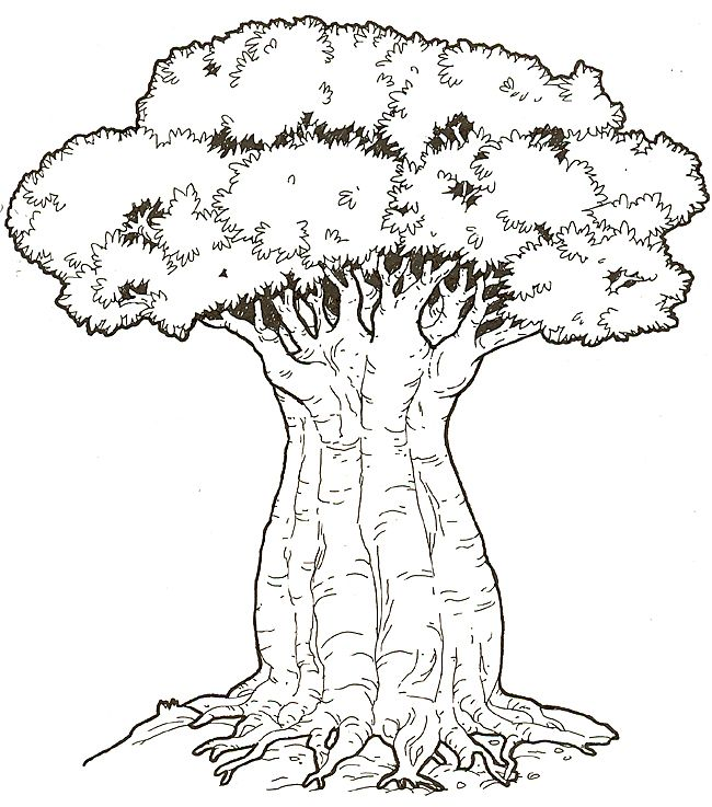 Coloring Picture Of Baobab Tree Honey Honey Lion Coloring