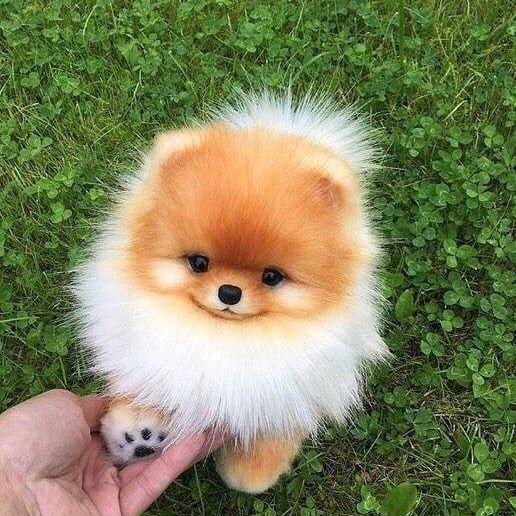 Wirst du ihm einen Händedruck geben? #Hund #Welpen #Tiere #Tiere #Lustig #Pfote -  #einen #ge... #animalsandpets