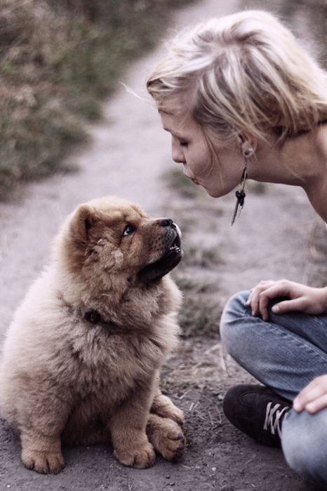 A Kiss Loov Chow Chow Fluffy Dogs Dog Love