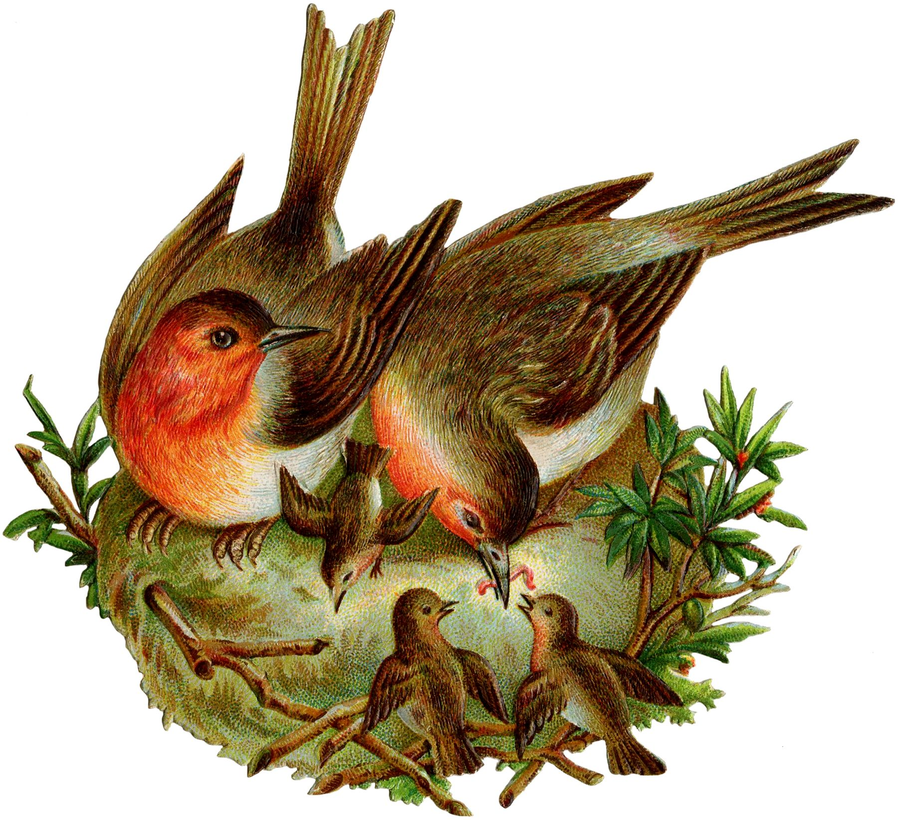Vintage Robins Image