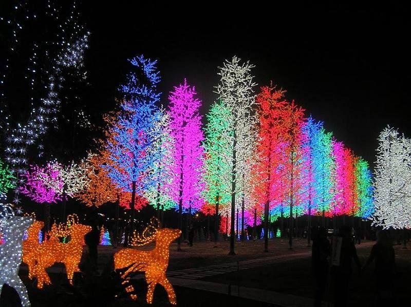 Amazing Christmas Lights