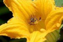 Benefits of Bee POLLEN…. superfood