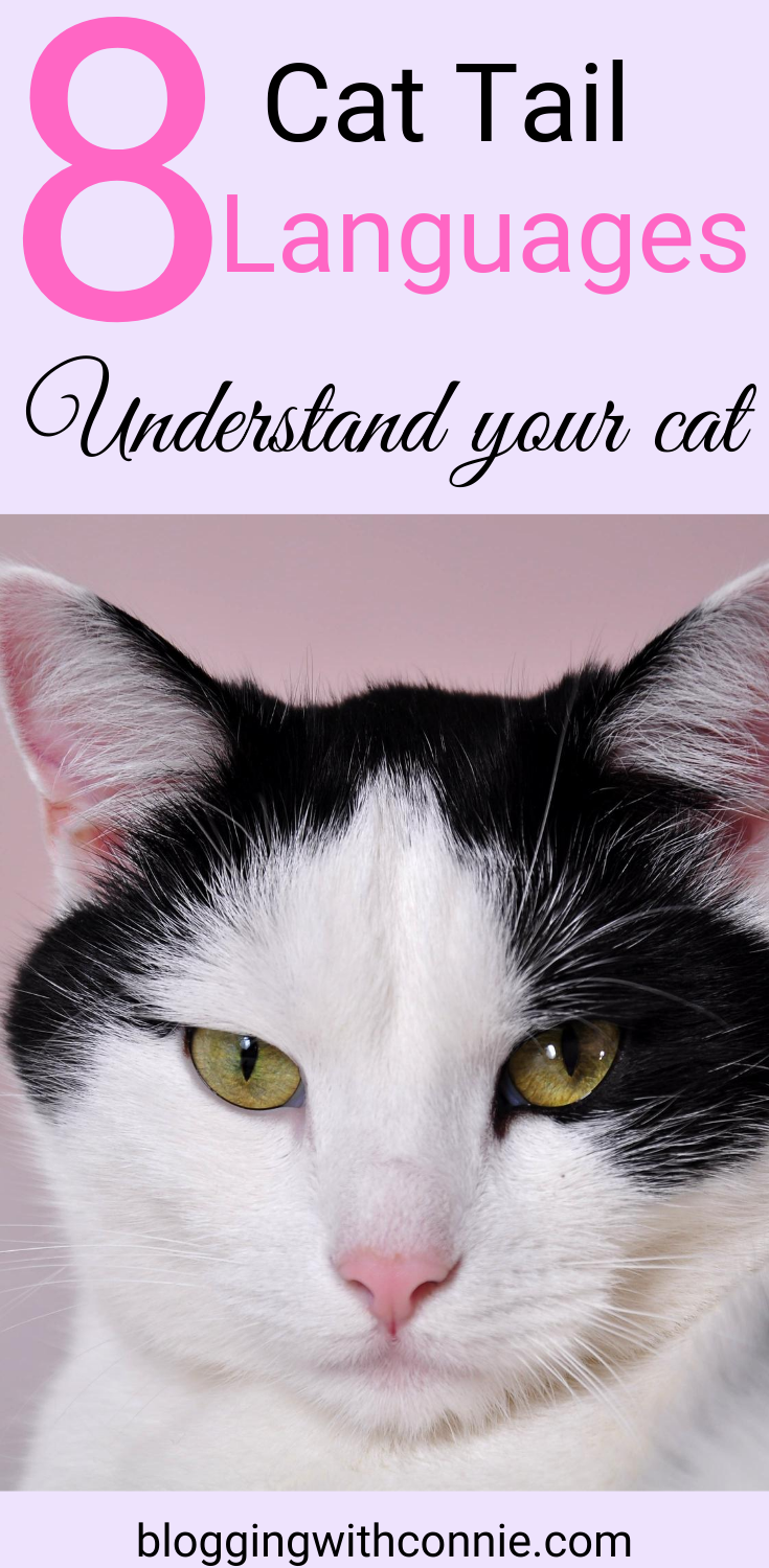 8 Cat Tail Languages And Their Meanings Cat Tail Language Cat Language Cat Tail