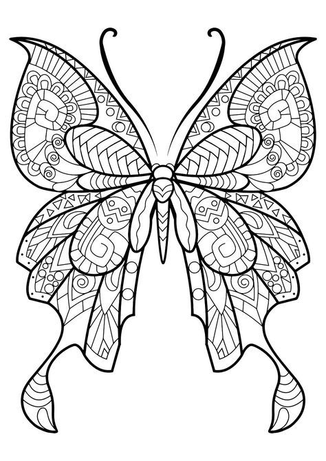 Adult Butterfly Coloring Book  Coloring Therapy and Coloring books