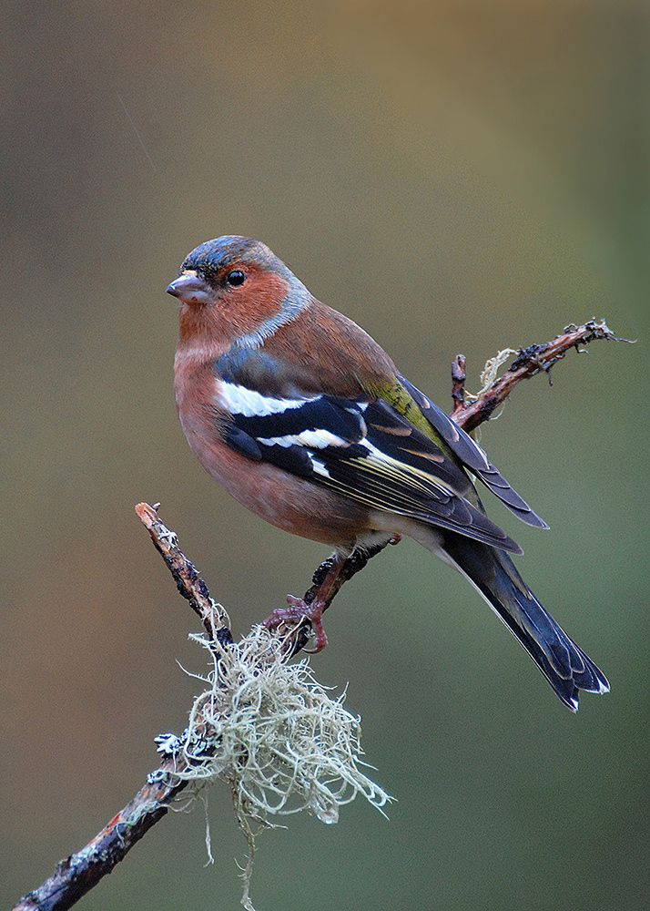 Vogel Anlocken So Gestalten Sie Ihren Garten Vogelfreundlich Wintergardening Wie Locke Ich Vogel In Meinen Garten Wir Verraten Wi Vogels Tuin Groenvink