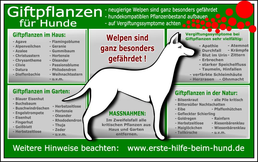 giftige zimmerpflanzen giftige gartenpflanzen hundegesundheit hunde hunde ern hrung und. Black Bedroom Furniture Sets. Home Design Ideas
