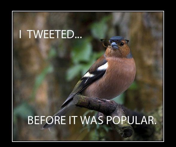 Hipster Bird~