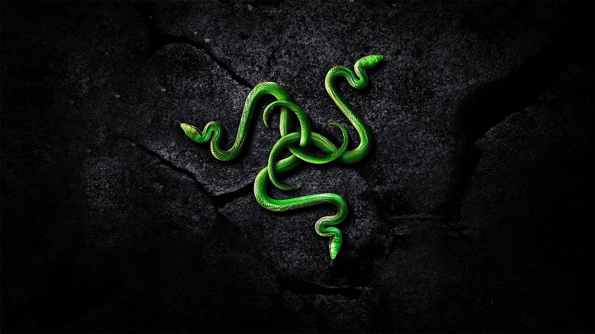 Razer Logo And Snake Wallpaper Обои для рабочего стола