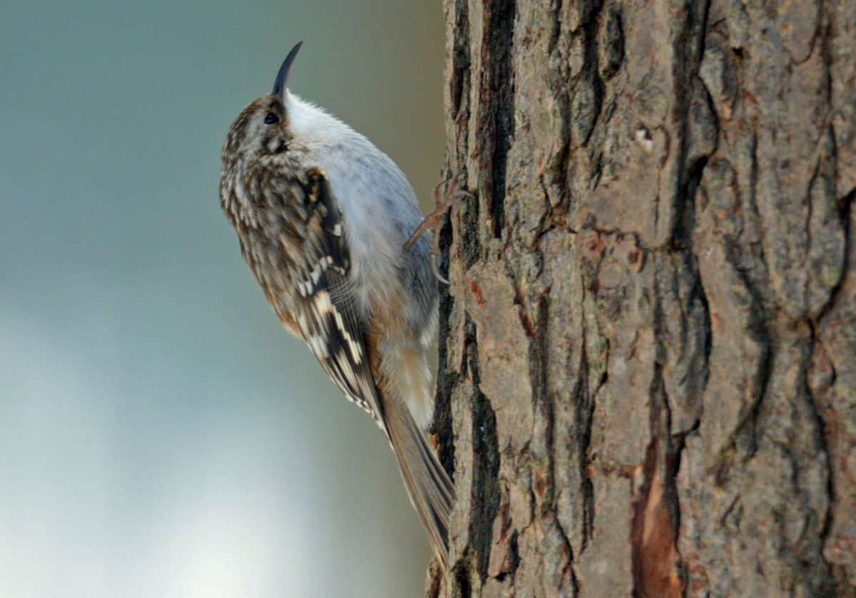 February 20, 2017 - Audubon Great Backyard Bird Count ...