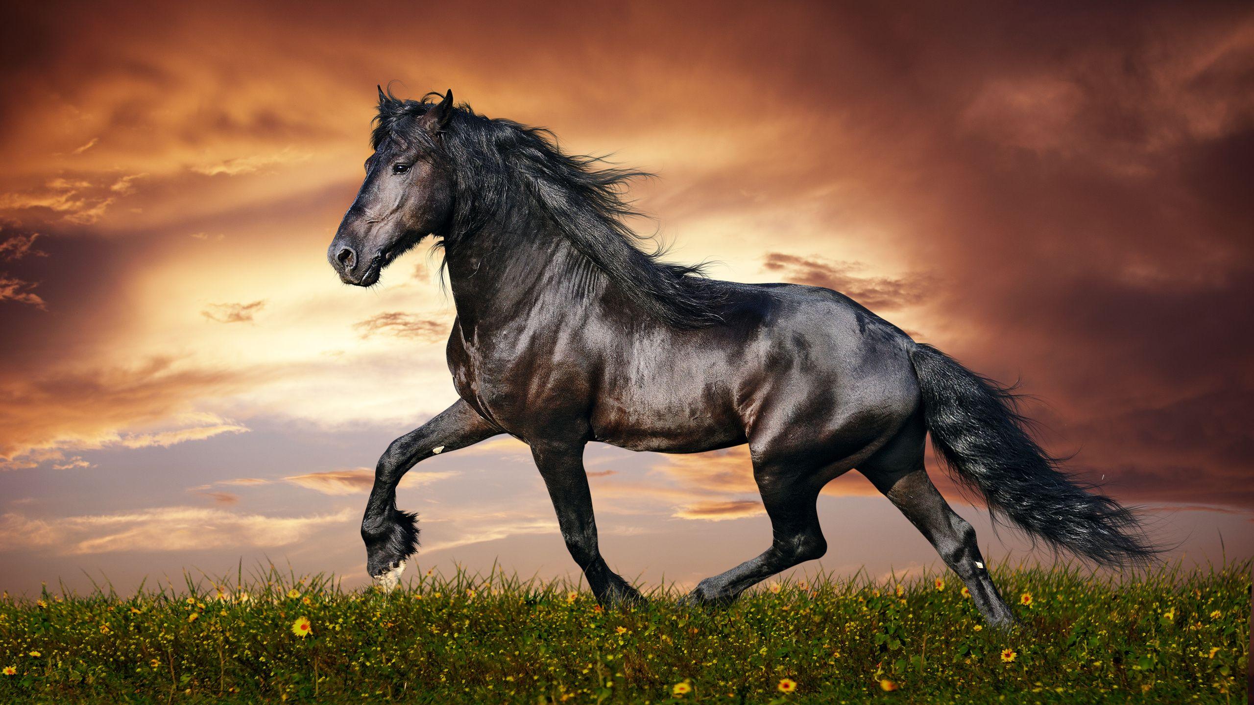 fond dcran hd cheval noir