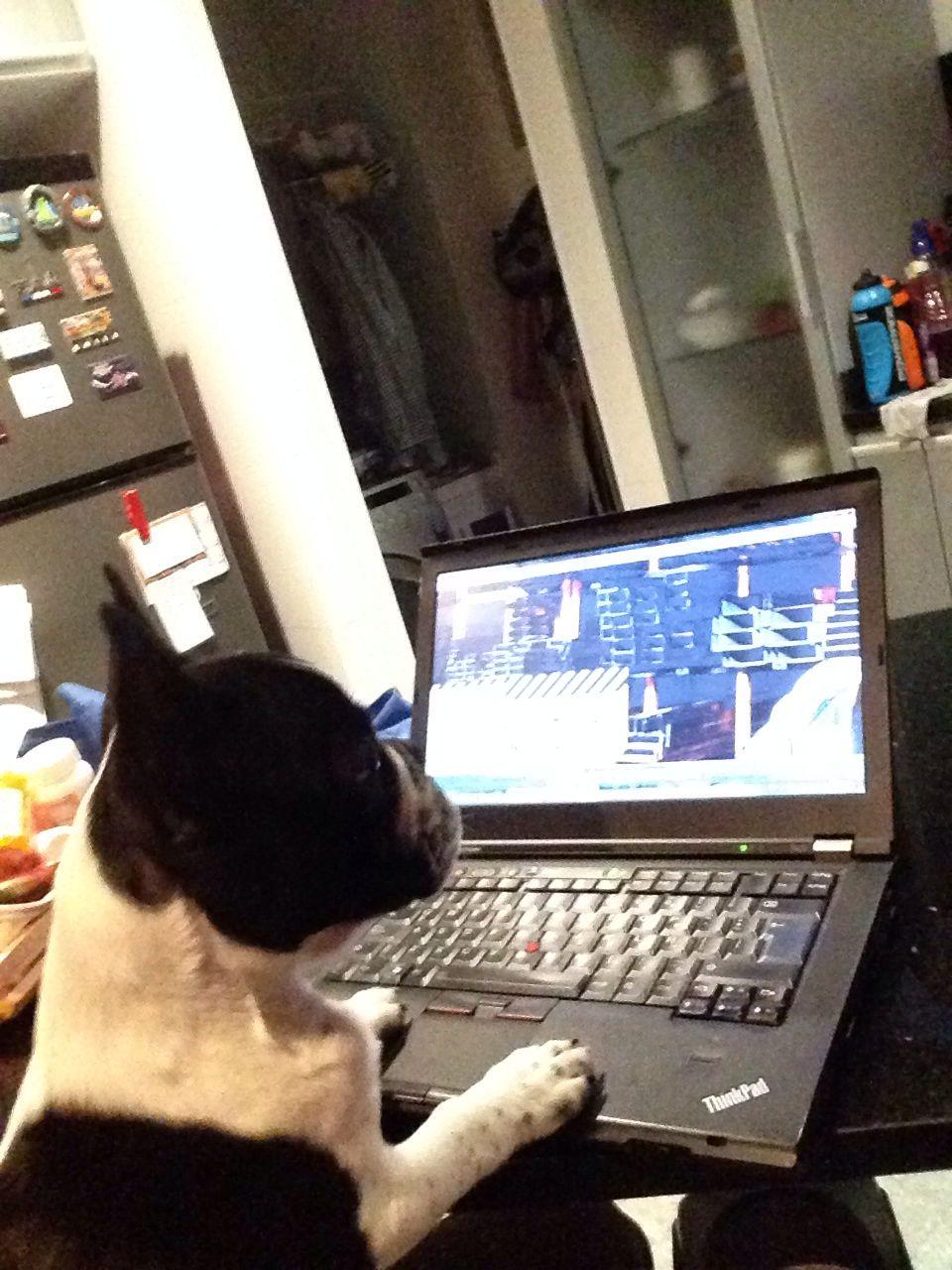 Rocco trabajando
