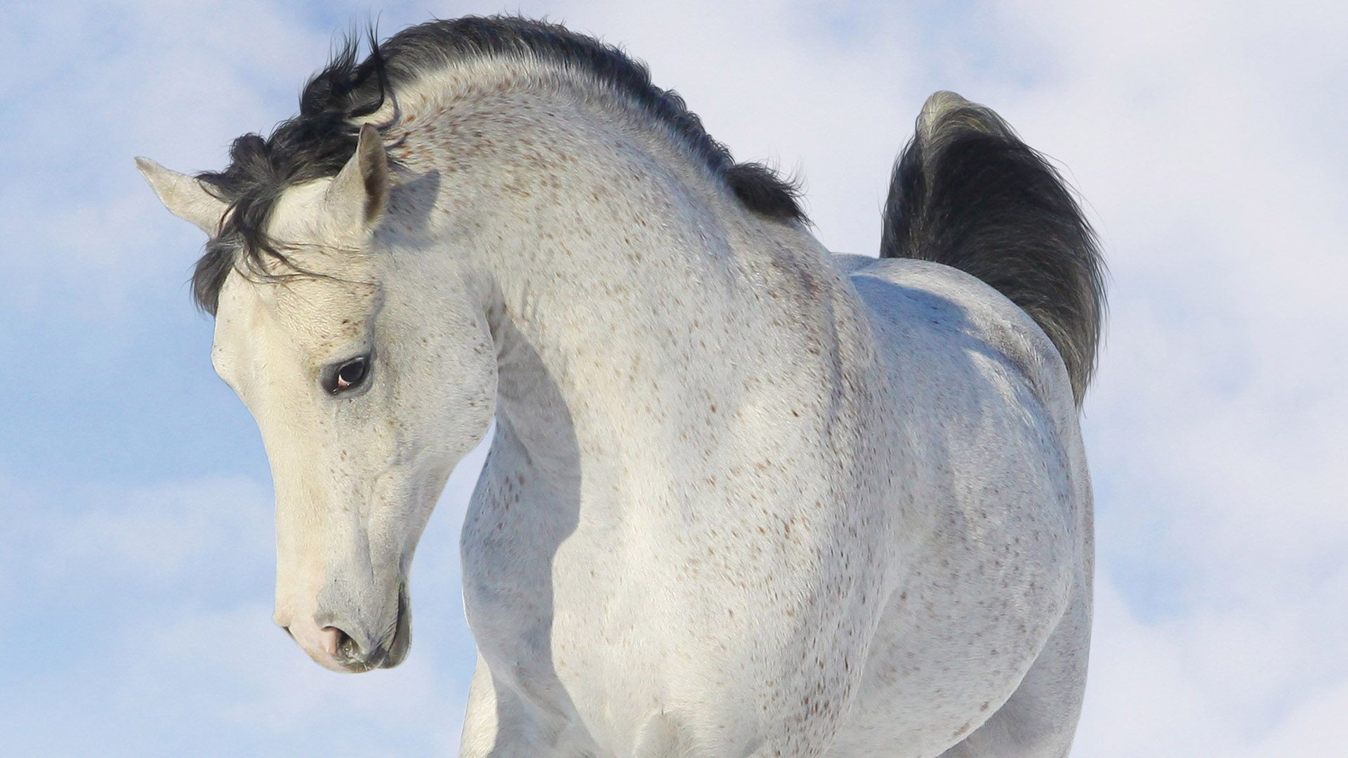 Amazing Wallpaper Horse Snow - 73774be45b01ab238f8d85aafefb66df  Collection_59871.jpg