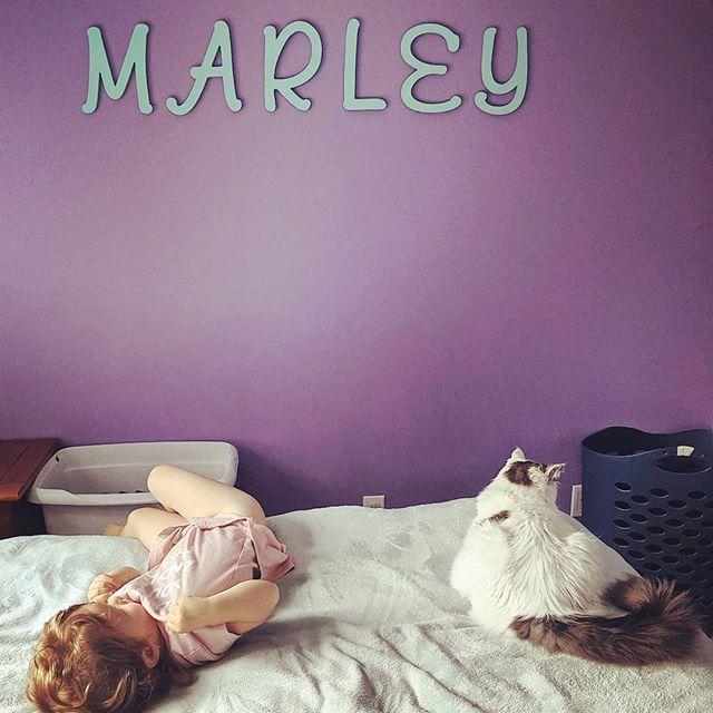 Just a girl and her cat Just a girl and her cat  Just a girl and her cat Just a girl and her cat