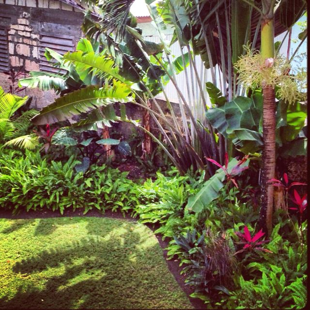 tropical garden great for along back fence balinese on attractive tropical landscaping ideas id=47405