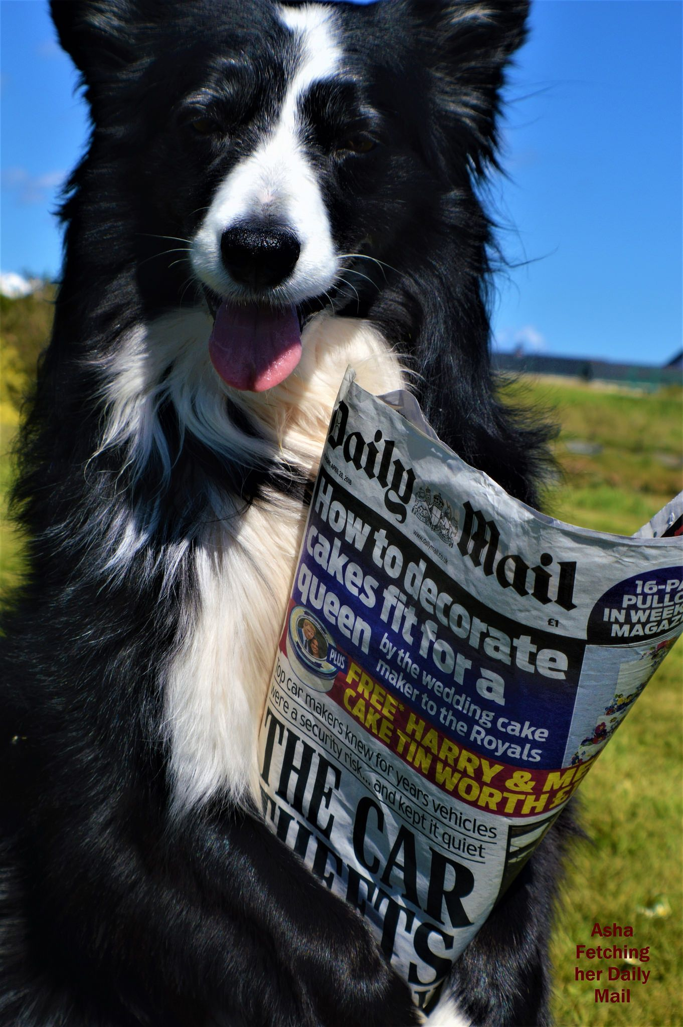 Asha Fetching Her Daily Mail Funny Pictures Daily Mail Wonderful Picture