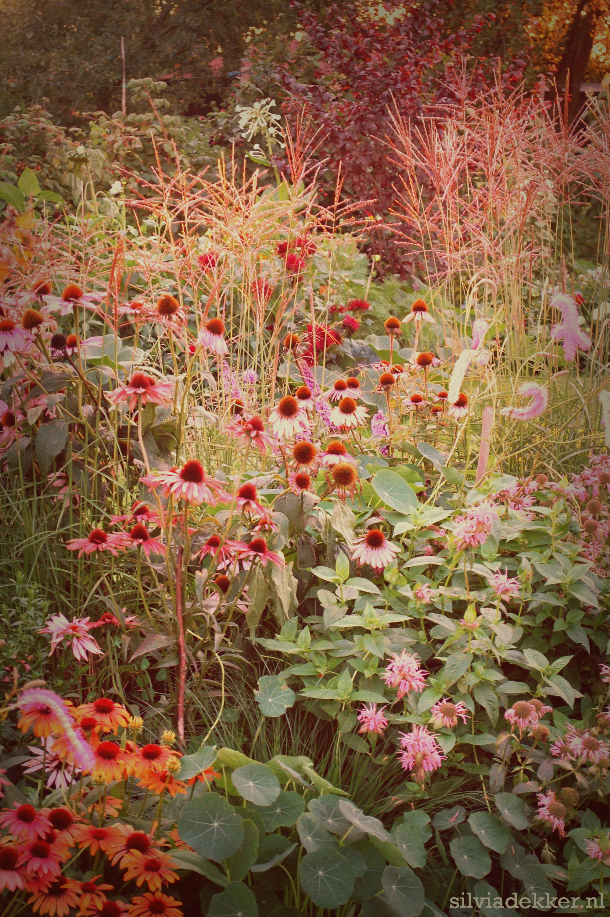 Prairie border with grasses, Bergamot and Echinacea. Follow me on ...