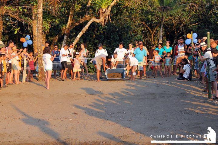 En el mes de diciembre, durante nuestra visita a Progreso en Bahía Drake tuvimos la oportunidad de disfrutar del Festival de Tortugas Marinas, esta actividad la realizan anualmente los integrantes de ACOTPRO con la finalidad de que la comunidad y sus alrededores disfruten de un fin de semana entre juegos para los más chicos, rica comida local y lo más importante la liberación de tortugas recién salidas de sus cascarones al mar.