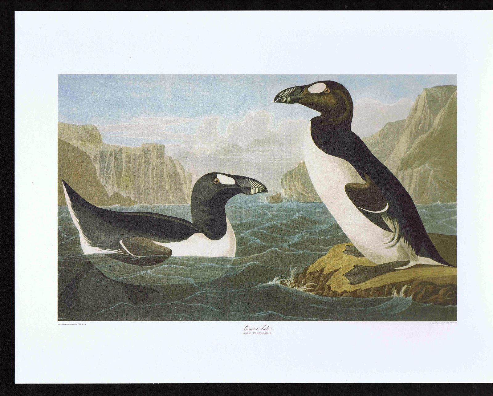 Great AUK Audubon Havell Color Bird Print | eBay