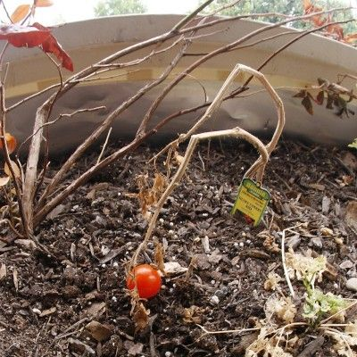 Cleaning The Garden In Autumn – Getting Your Garden Ready For Winter