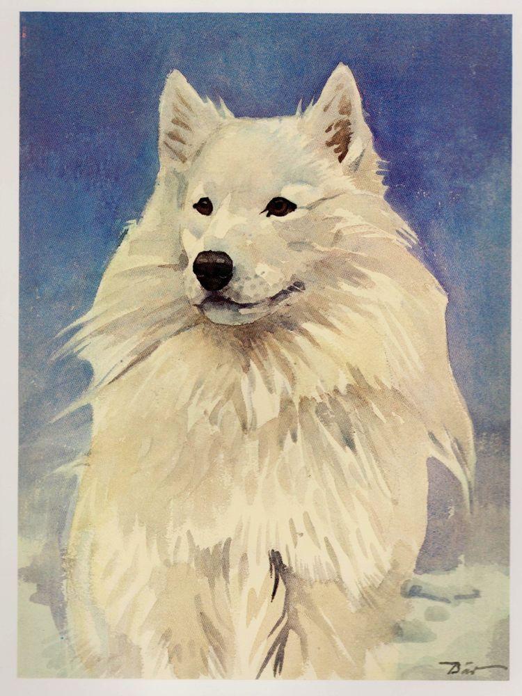 Vintage SAMOYED Dog Print Gallery Wall Art Beautiful SAMOYED ...