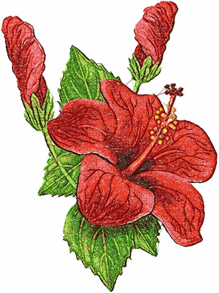 Hibiscus Photo Stitch Free Embroidery Design 3 Photo Stitch Embroidery Desig Sewing Embroidery Designs Embroidery Flowers Pattern Machine Embroidery Projects