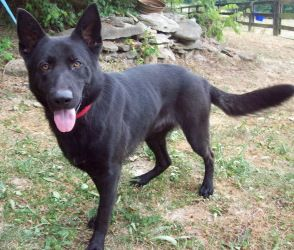 Adopt Dylan On German Shepherd Dogs Dogs Cute Animals