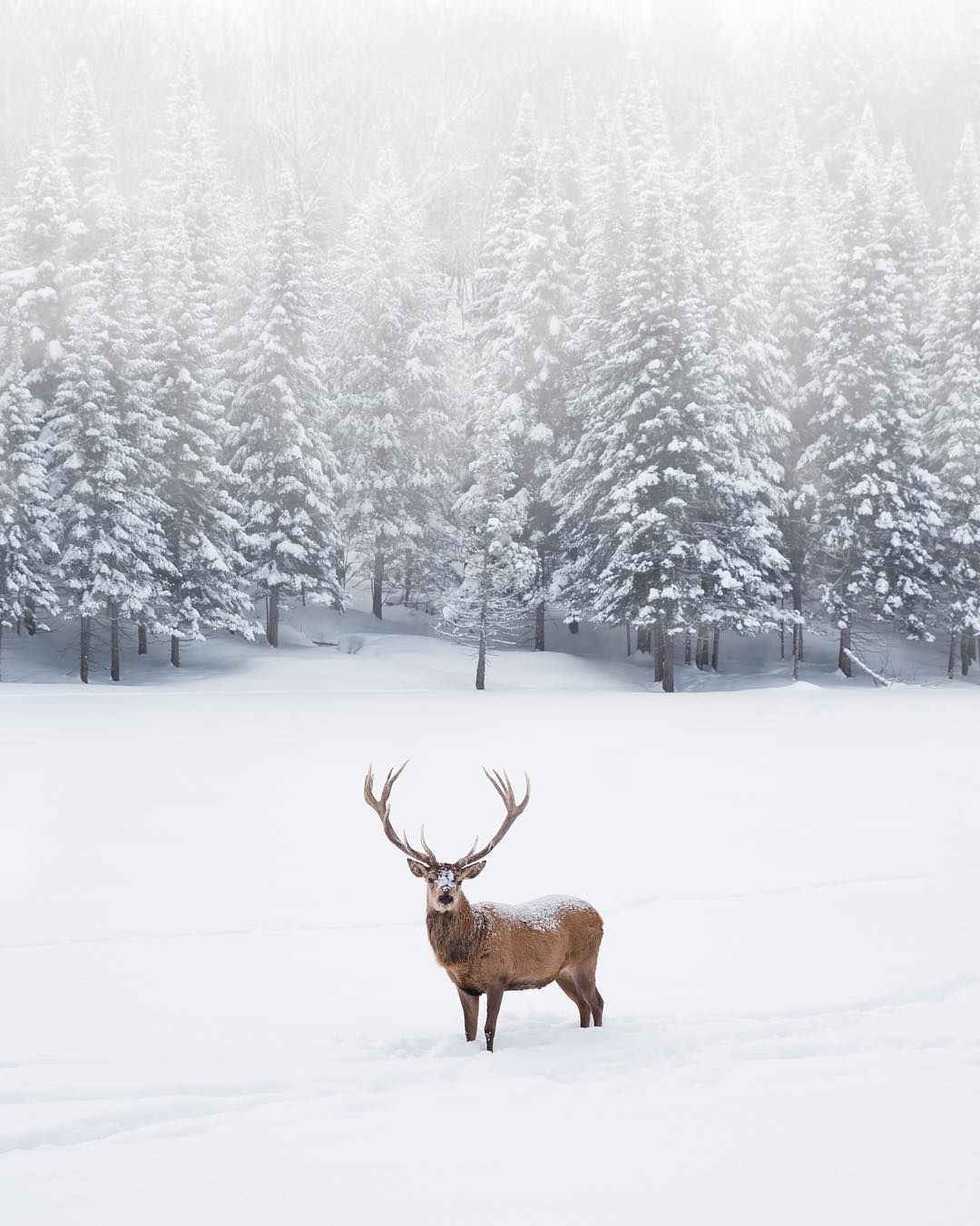 Parc Omega is stunning to explore in the winter. You can keep warm inside your car as you drive past all the Canadian animals, which are extra fluffy with their winter coats of fur.