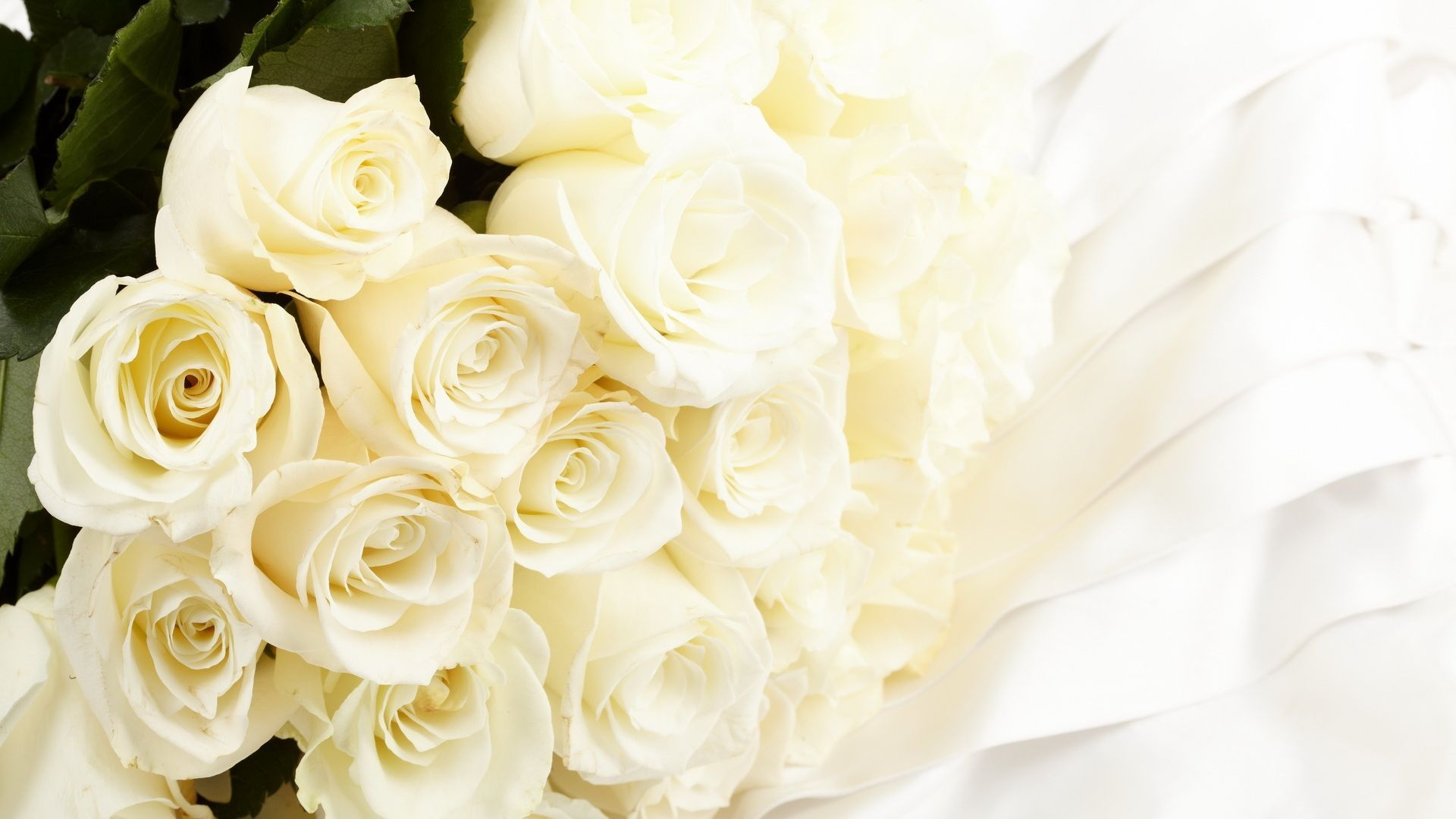HD Wallpaper And Background Photos Of Pure White Roses For Fans Images
