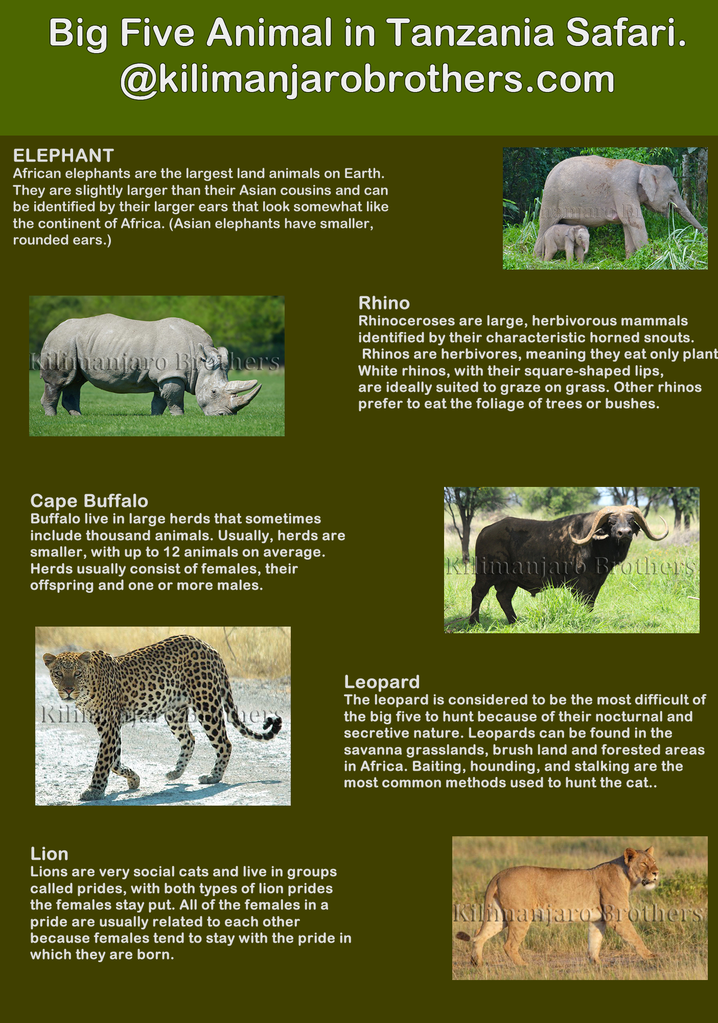 Have you already seen big five animal? The Big Five refers