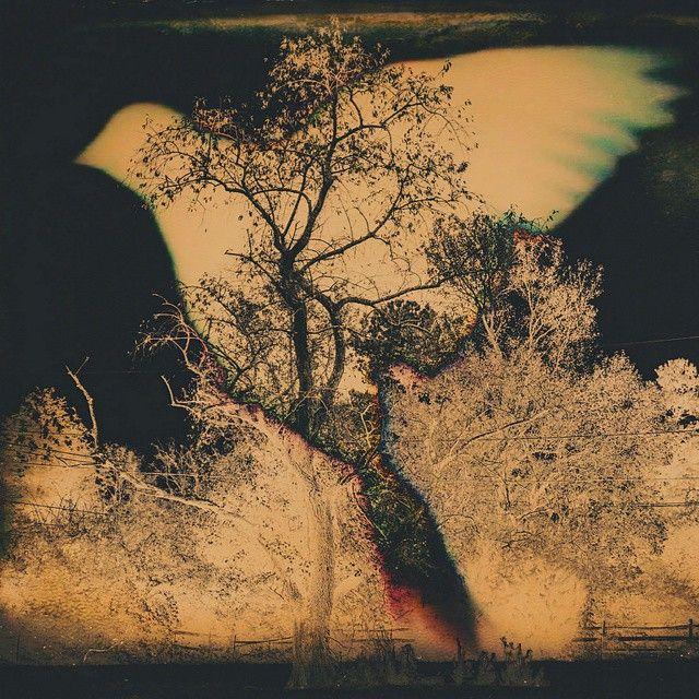 #Freedom By Drachenfanger #notm.ru #wow #tree #bird #instamood #beautiful #amazing @notm_tattoo