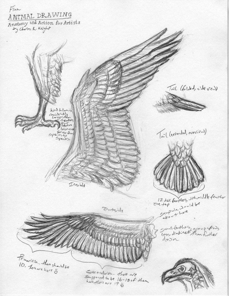 Bird study artists google search birds art flight and