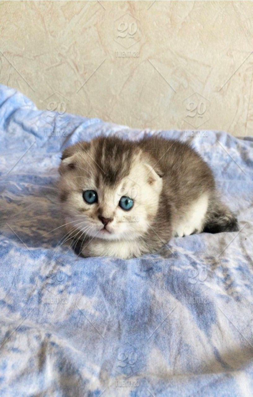 Pin On Animals Cute Baby