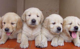 Bringing A Puppy Home Newborn Puppies Puppies Your Dog