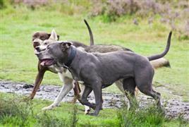 Louisiana Dog Names Dog Names Dog List Dogs