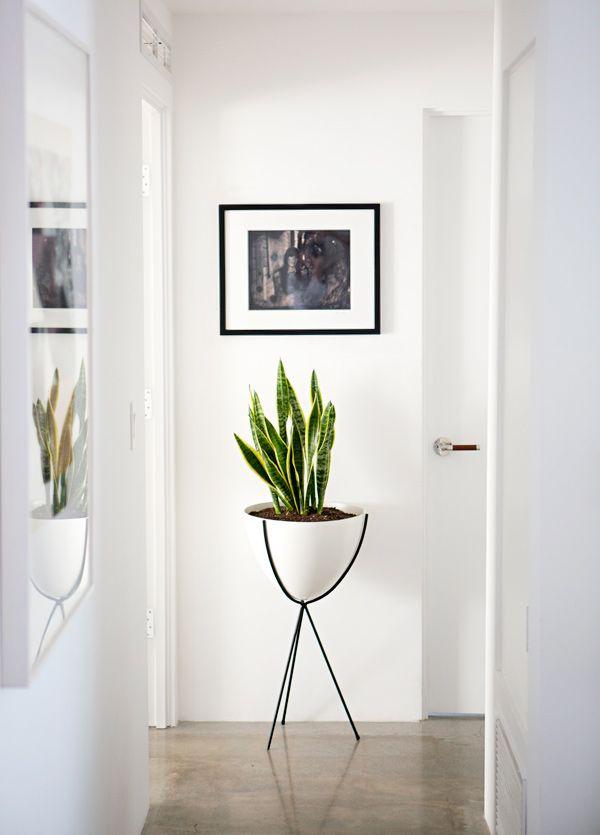 une plante pour relooker et decorer le couloir