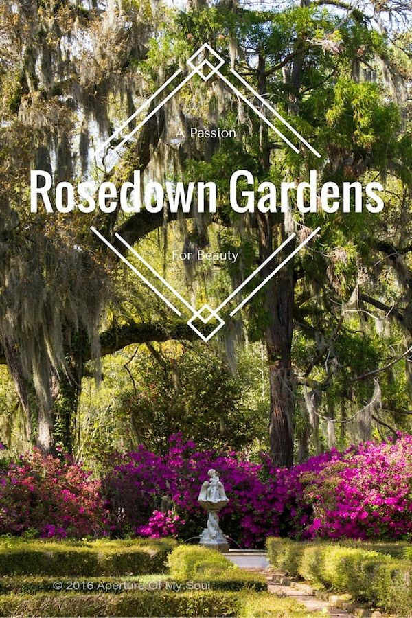 Rosedown Gardens - Two Women's Passion For Beauty