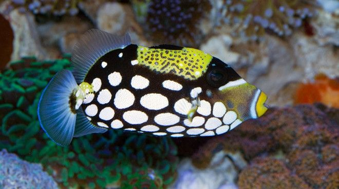 Saltwater Fish For Sale Buy Saltwater Fish Online Tagged Add Saltwater Fish For Sale Fish Fish For Sale