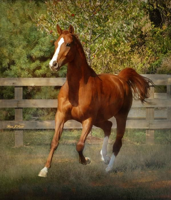 Morning Has Broken By Fran J Scott Most Beautiful Horses Warmblood Horses Horses
