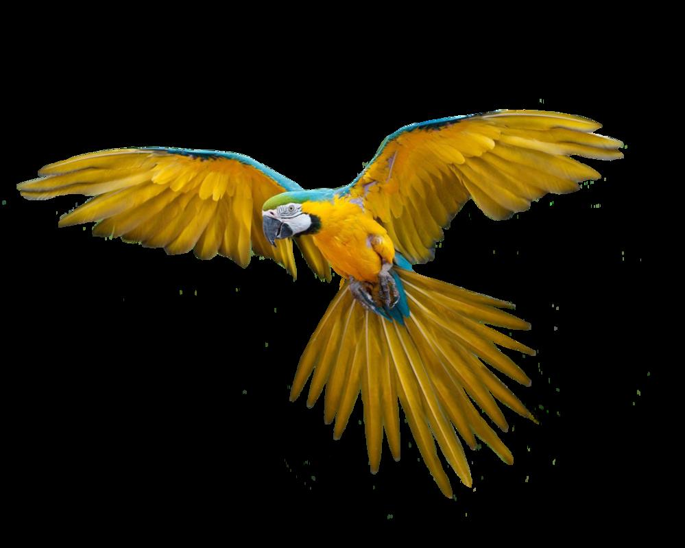 Pin by Lillian Cuesta-Lopez on Wind Beneath My Wings   Pinterest