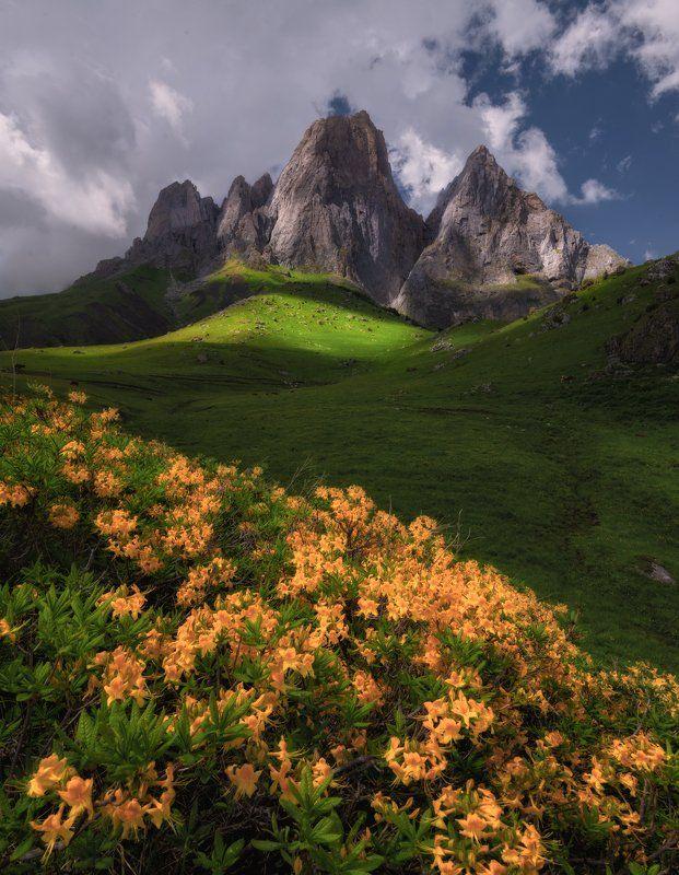 Фотография фотографа - Цветущая Ингушетия.   Живописные ...
