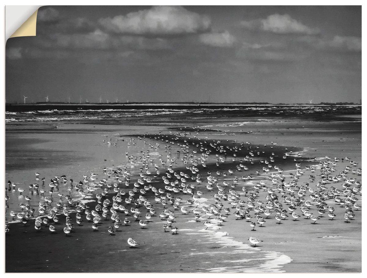 Photo of Wandfolie »S. Herppich: Strand mit vielen kleinen Vögeln«
