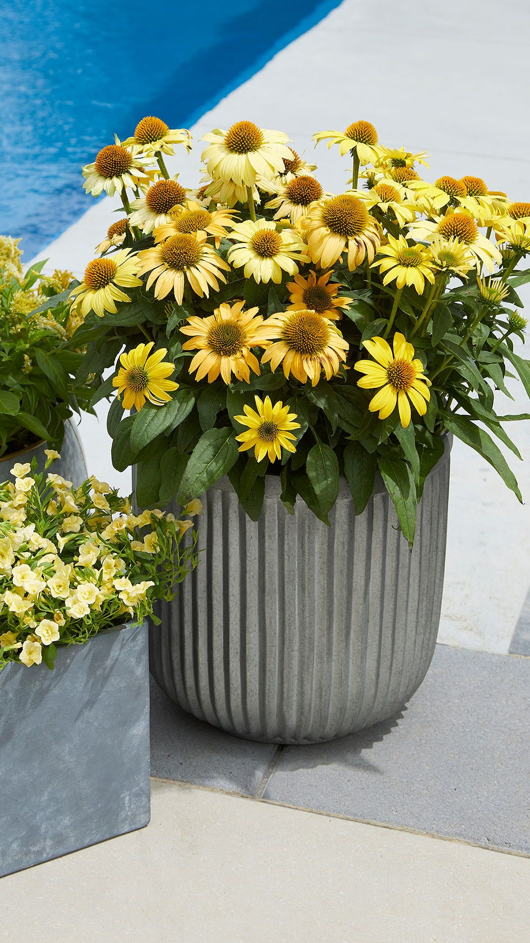 Better Homes Gardens Ellan Faux Galvanized Plastic Planter 12 Walmart Com In 2020 Flower Pots Sunflower Home Decor Plastic Planter