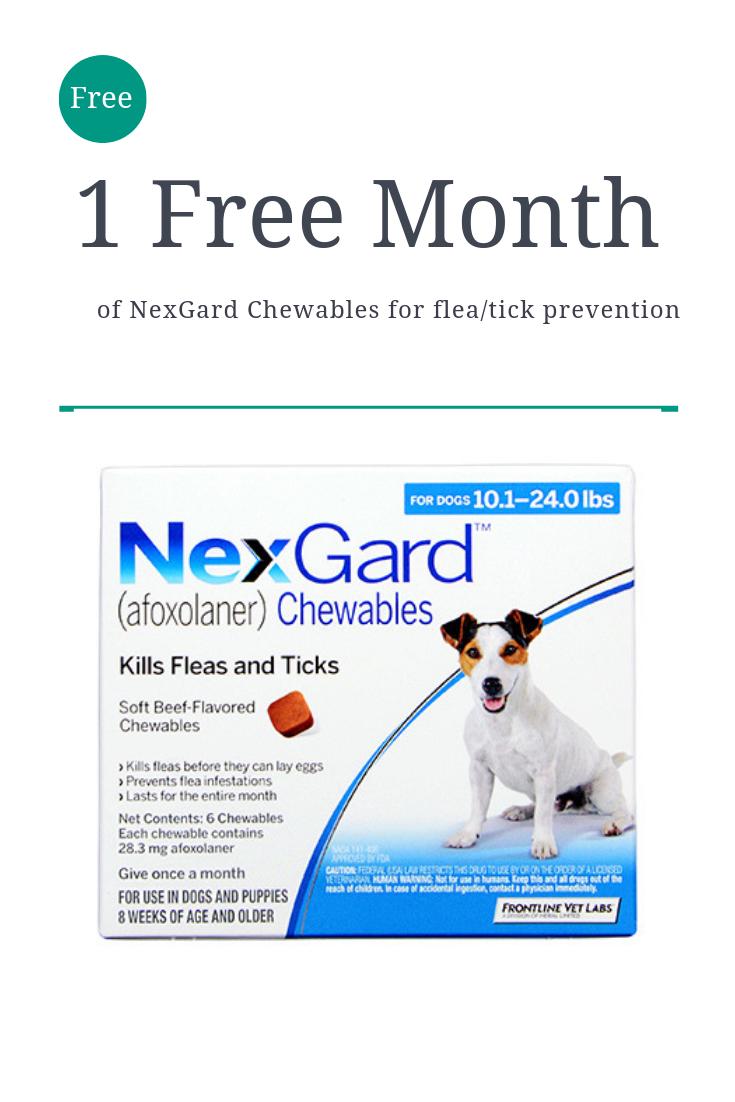Nexgard Flea + Tick Preventative (With images) Dogs