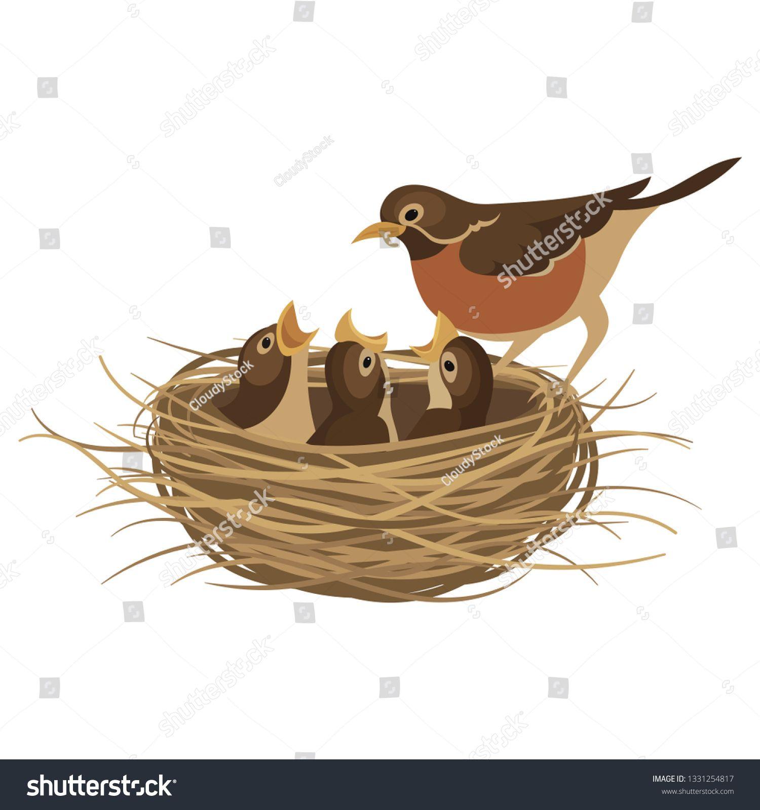 35+ Baby Bird Nest Clipart