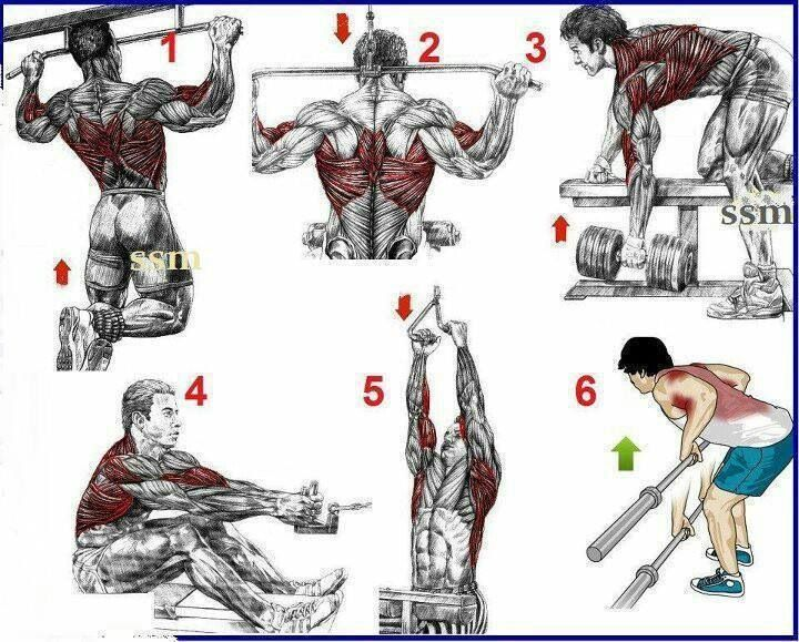 Great Back Workouts On One Page