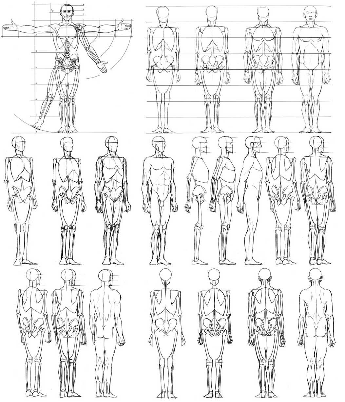 Human Anatomy For Artists Pdf Wallpaper | Anatomia | Pinterest ...