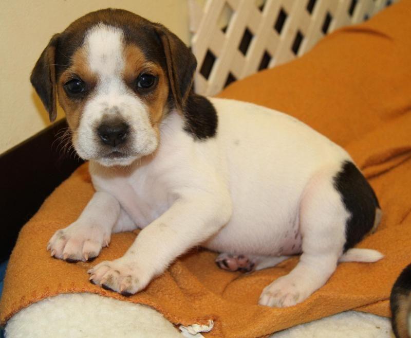 Dog Day Care In Alpharetta Ga