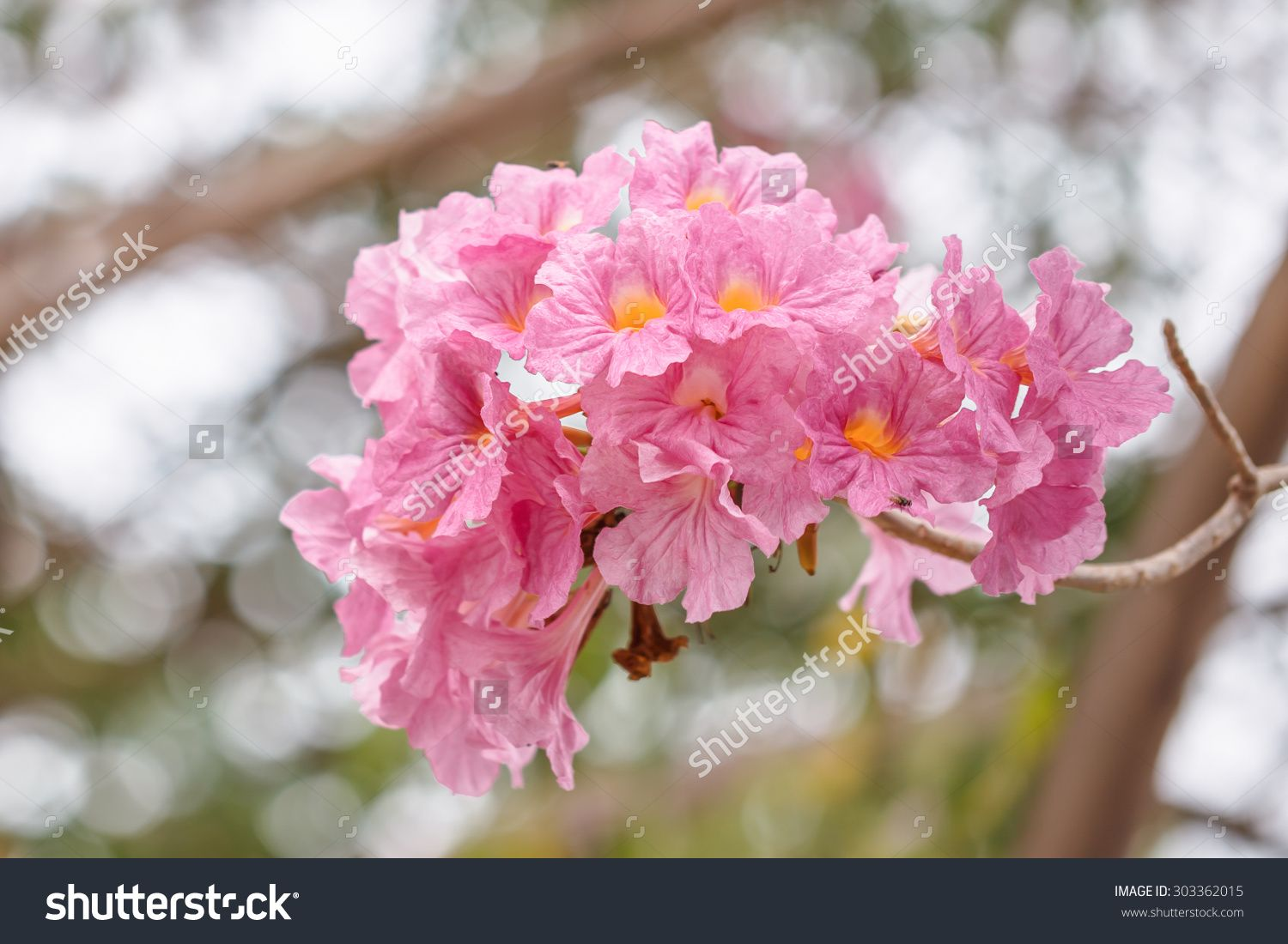 Pink Flowers Tree Name Garden Inspiration