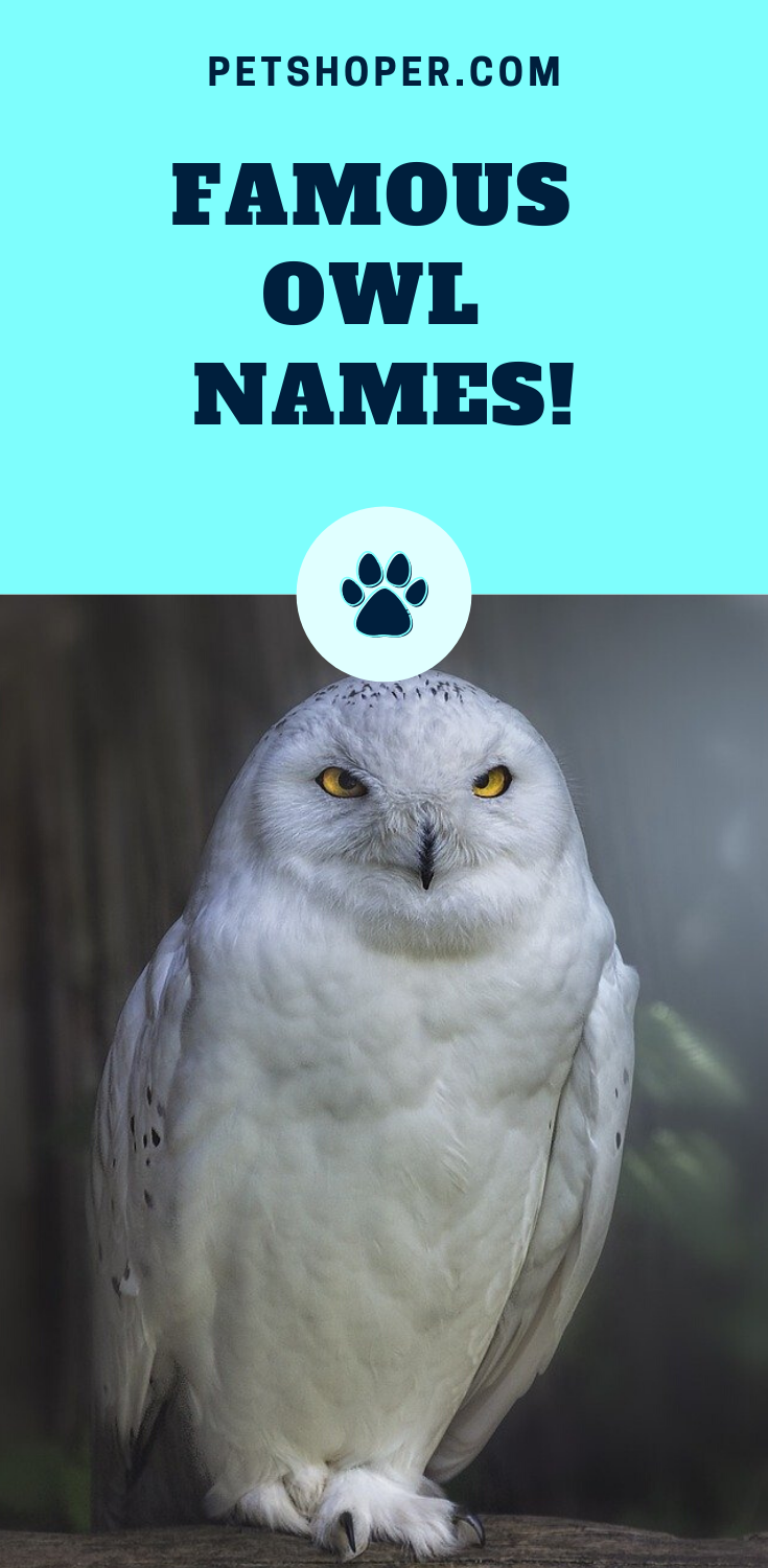 Owl Names 200 Incredible Ideas Incl Harry Potter Owl Petshoper Pet Names Owl Harry Potter Owl